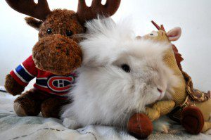 FLAMES1 300x199 Puck the Bunny Predicts: Montreal Canadiens vs Calgary Flames
