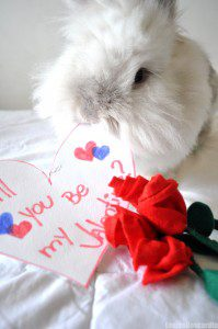 Puck Valentine 13 199x300 Puck the Bunny Predicts: Montreal Canadiens vs Florida Panthers [VIDEO]